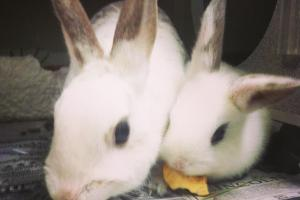 Bunnies - New Rochelle Humane Society