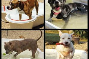 Dogs enjoy pool we donated - Babylon Animal Shelter