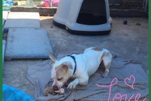 Pumpkin the dog loves her toy - Liberty Humane Society