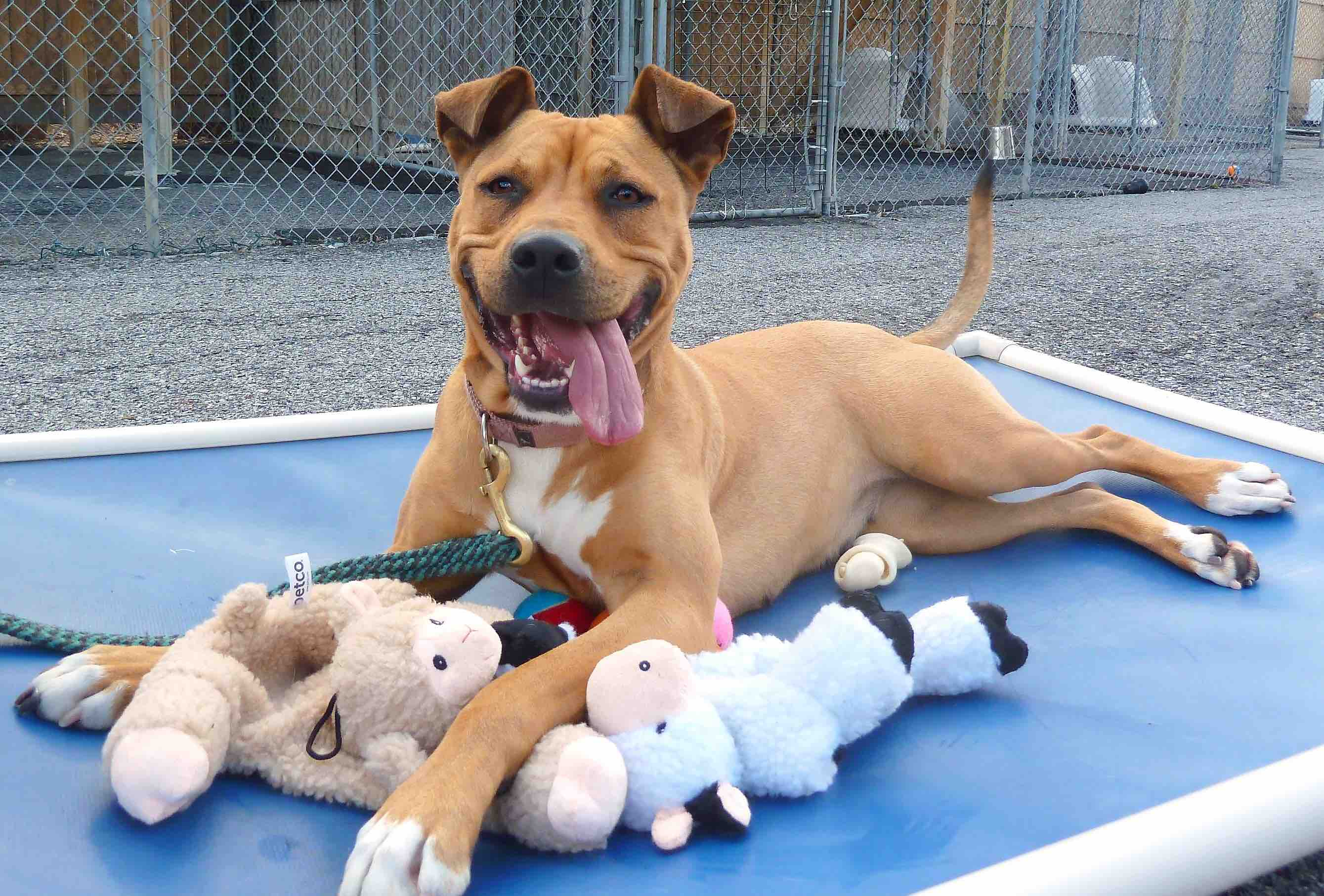 Image result for animal shelter happy